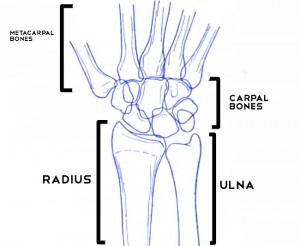 anatomy of wrist bones